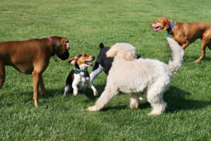 Group of dogs playing outside