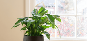 Plant on windowsill at Brix